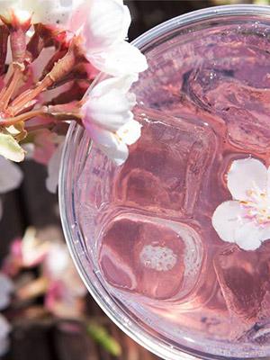 벚꽃 음료 총출동