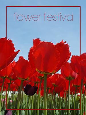 꽃 보러 가요~ 미리 보는 전국 꽃 축제