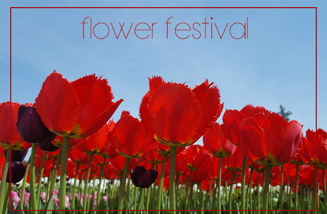 꽃 보러 가요~ 미리 보는 전국 꽃 축제의 썸네일 이미지