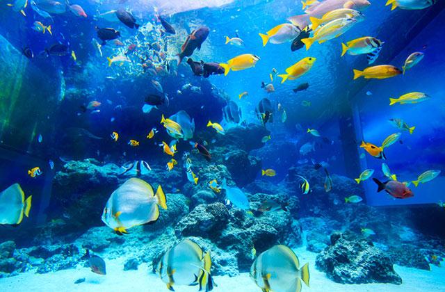 아름다운 바다 속 투어, 세계 아쿠아리움 탑 4의 썸네일 이미지