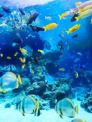 아름다운 바다 속 투어, 세계 아쿠아리움 탑 4