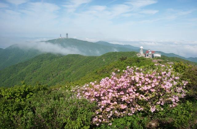 5월의 산 속으로의 썸네일 이미지