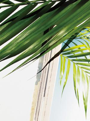 여름 피부를 이기는  핫 셀러 간증템