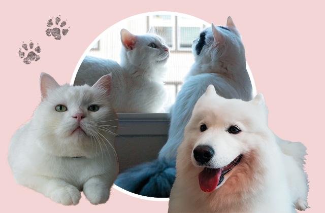 망충하고 얄망스러운 매력이 있는 스타 반려동물들.의 썸네일 이미지