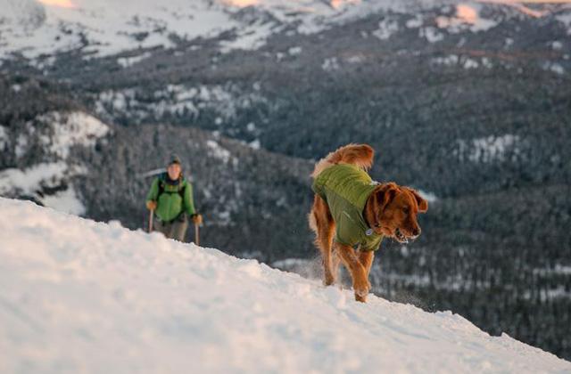 반려견과 떠나는 겨울 캠핑의 썸네일 이미지