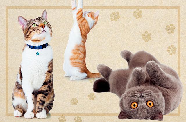 고양이처럼 소확행 챙기는 법 의 썸네일 이미지