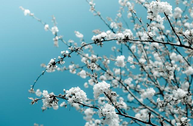 벚꽃 엔딩 뷰티템의 썸네일 이미지