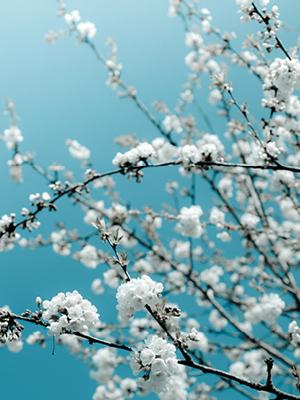 벚꽃 엔딩 뷰티템